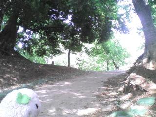 田んぼ道と湖の見える丘